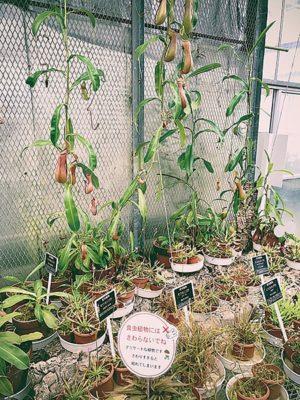 県立花きセンターの食虫植物