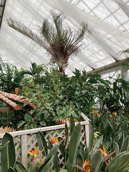 県立花きセンター「花の館温室」