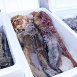 新鮮な魚介